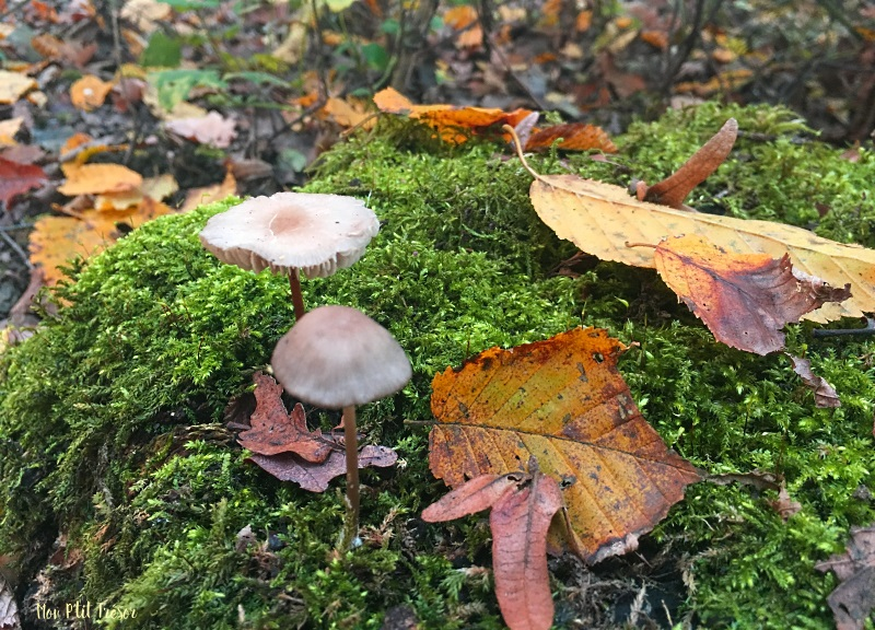 foret-champignons-1
