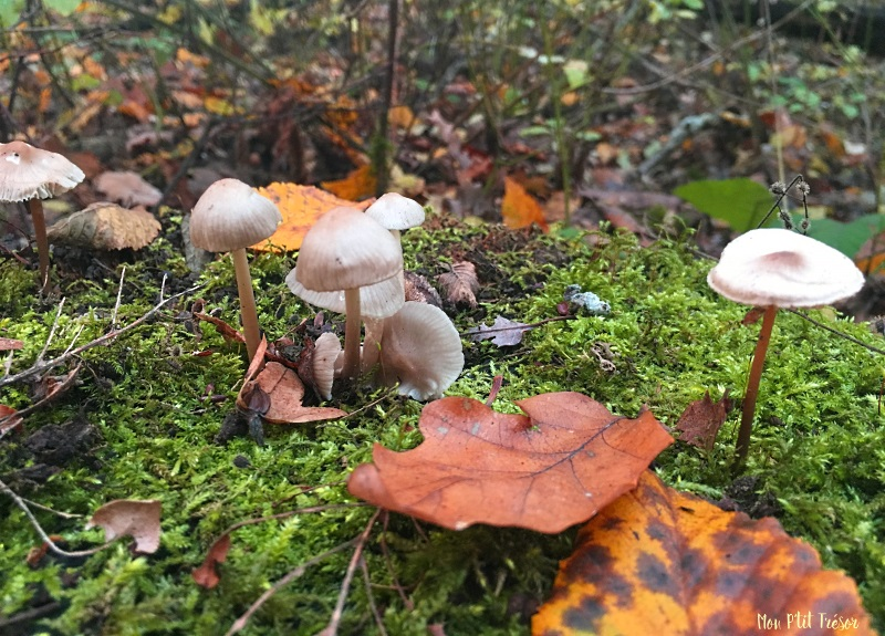 foret-champignons-2
