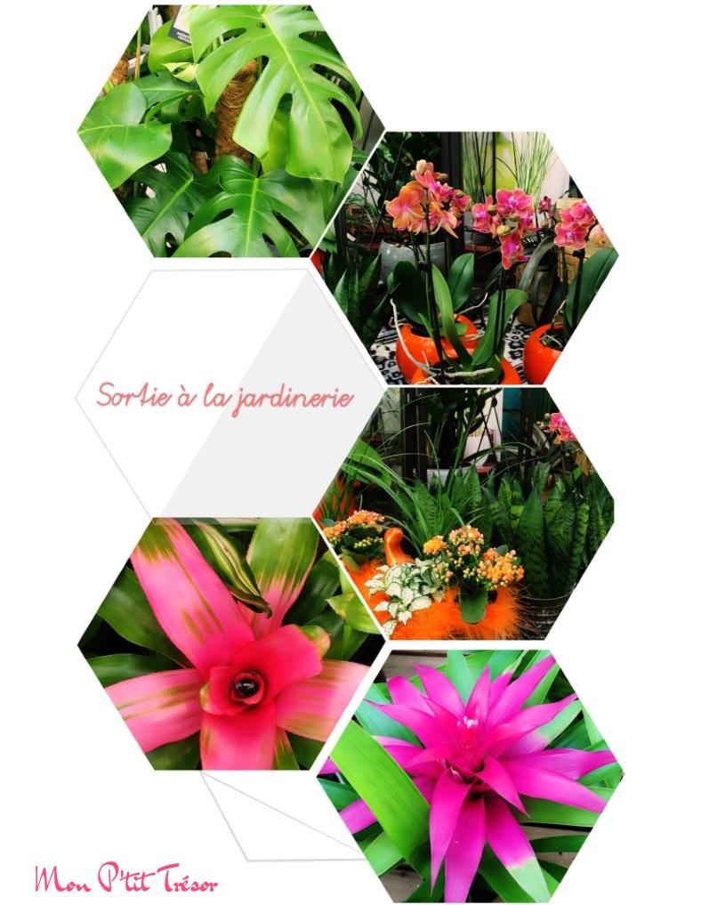 Sortie à la jardinerie & Cie