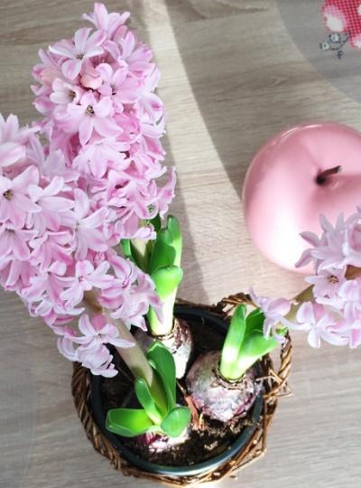 La douce odeur de la jacinthe ⚘
