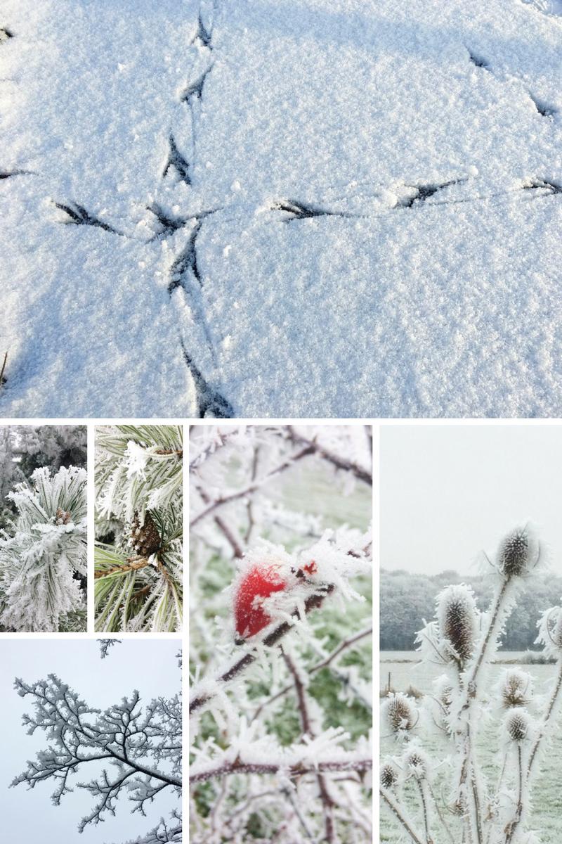 grille de photos hivernales avec des pattes d'oiseau dans la neige et du givre sur les plantes