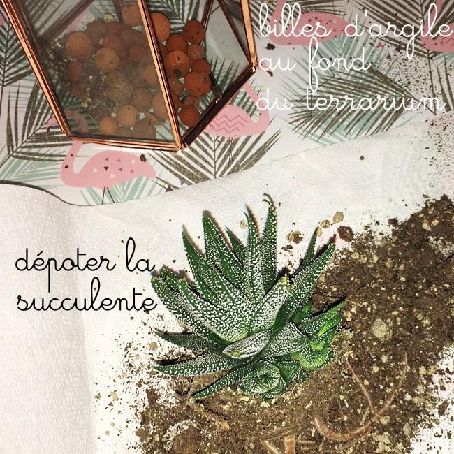 dépoter succulente