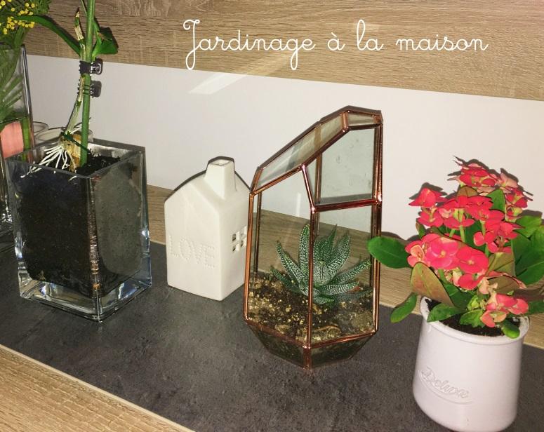 Jardinage à la maison : rempotage et terrarium
