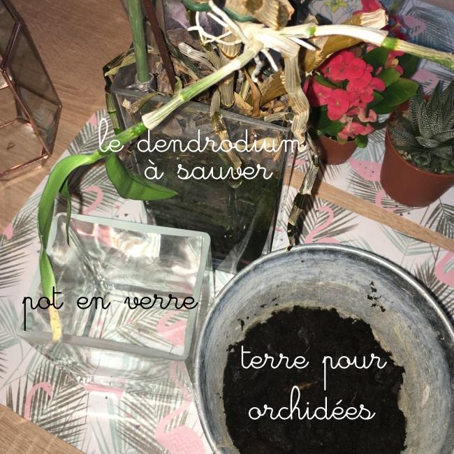 rempotage dendrobium