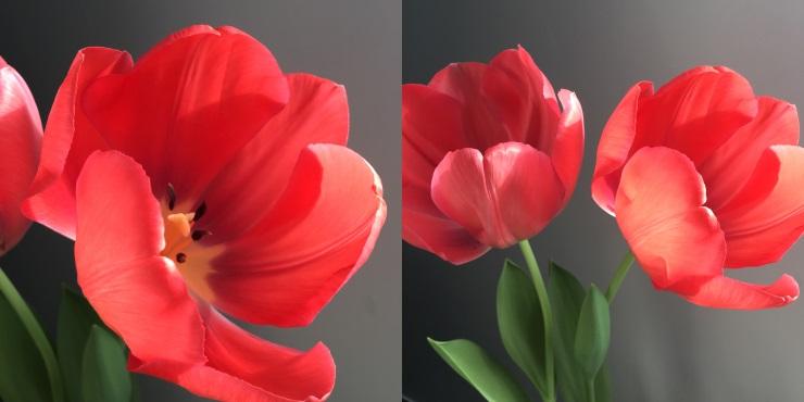 je vous ai déjà dit que j'aimais les tulipes...