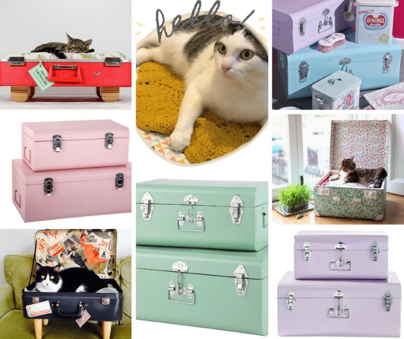 un chat + une valise = un lit pour chat