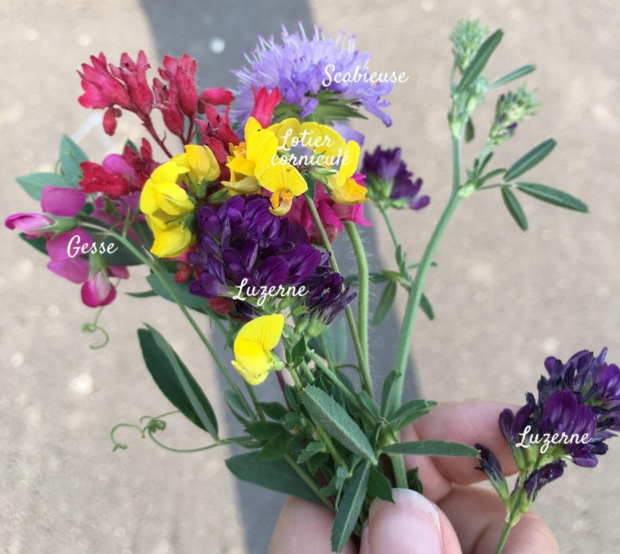 nom qq fleurs sauvages