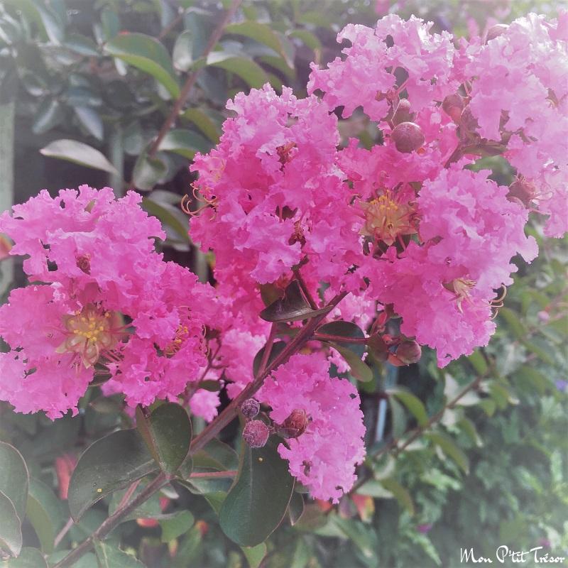 fleur de papier crepon