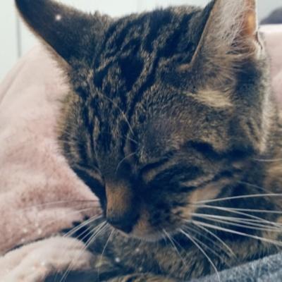 Faire face au diabète soudain d'un chat